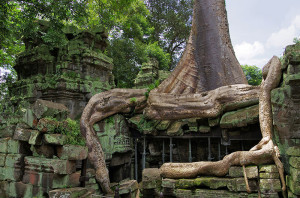 Ta_Prohm_Angkor_giant_tree