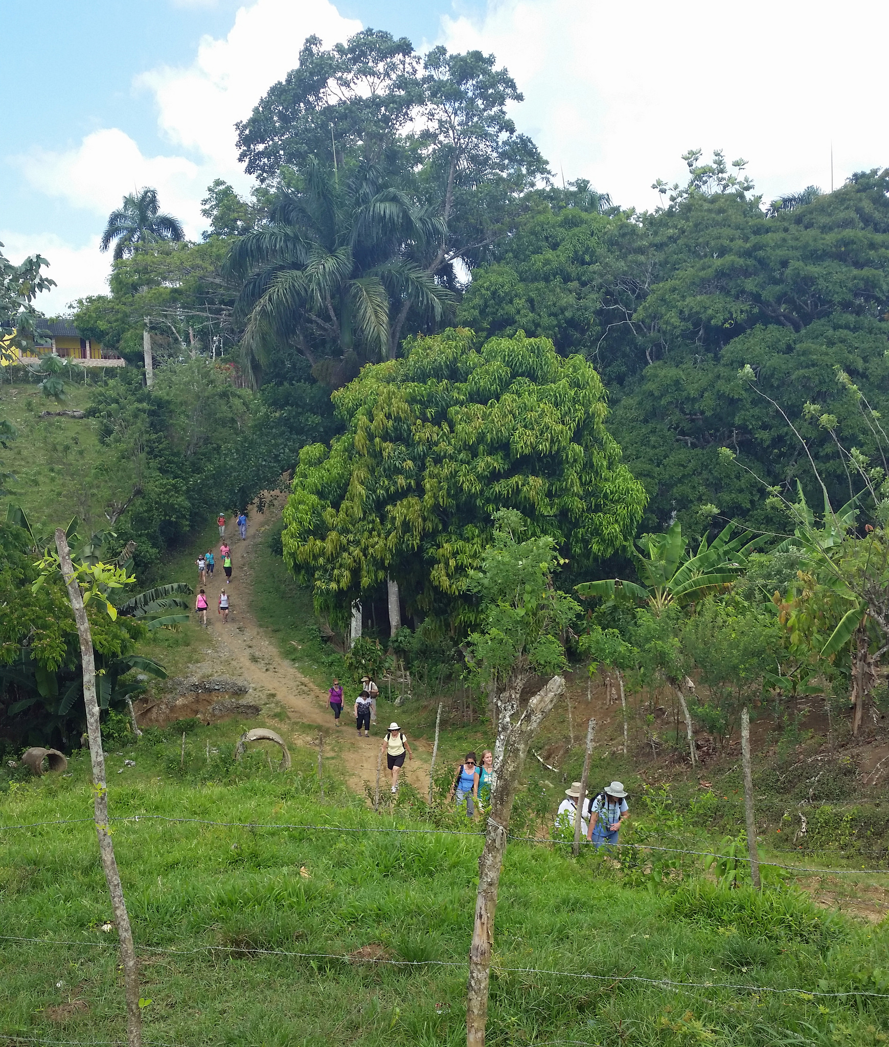day4- cocoa farm